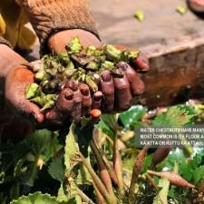 Health Benefits of Singhare Ka Atta